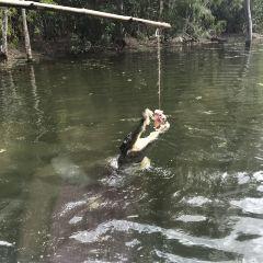 Hartley's Crocodile Adventures User Photo
