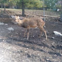 鹿園用戶圖片