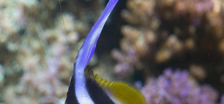 Sea Life3