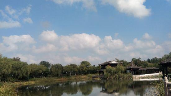 尚湖水上森林