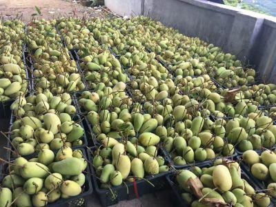 Puda Mango Park