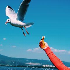 海埂公園用戶圖片