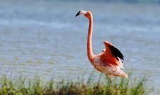 粉红湖-里约拉加尔多-203****397