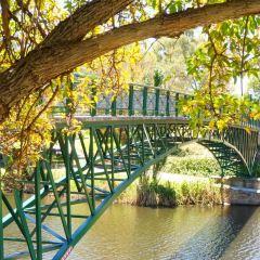 多倫斯河用戶圖片