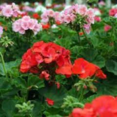 Million Sunflower Garden User Photo