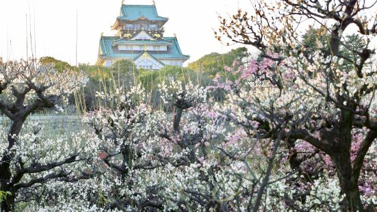 오사카 성 매림