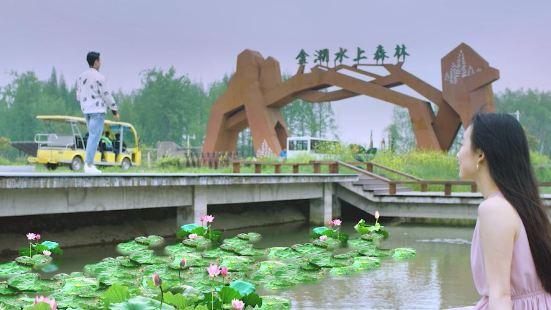 Jinhu Water Forest Park
