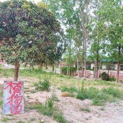 陝南珍稀植物園用戶圖片