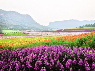 Qingxi Valley Tourist Area • Huatian Wineland Scenic Area