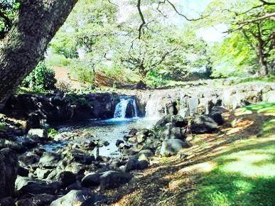 莉莉烏卡拉尼女王植物園