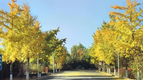 Century Forest Park