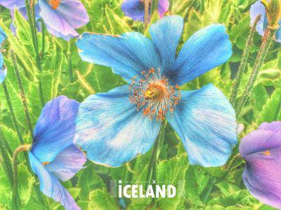 Lystigarðurinn