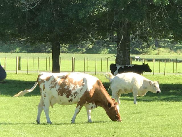Cambridge Farmstay