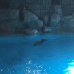 Sea Lion Point User Photo