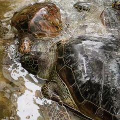 거북이섬 여행 사진
