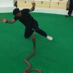 Phuket Snake Show User Photo