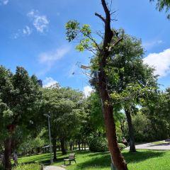 다안공원 여행 사진