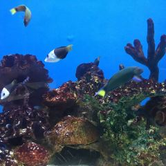 마닐라 해양공원 여행 사진