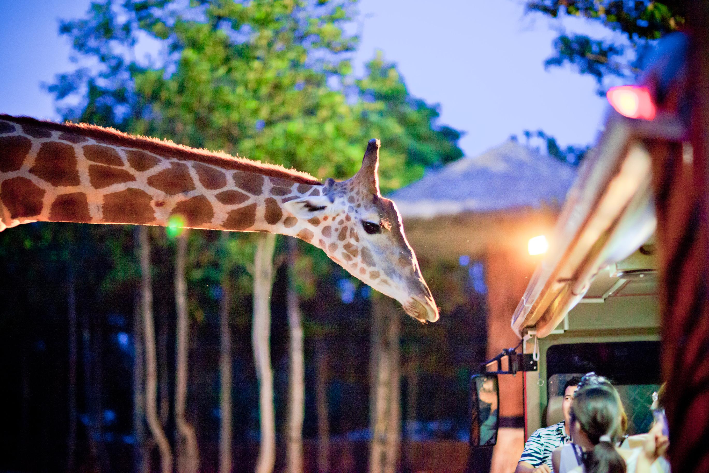 Chiang Mai Night Safari Park Ticket