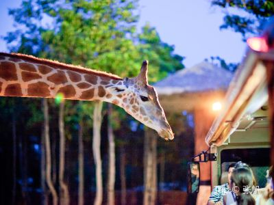 The Chiang Mai Night Safari