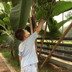 타이창(태창) 현대농업원 여행 사진