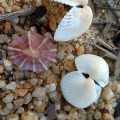 珊瑚灣用戶圖片