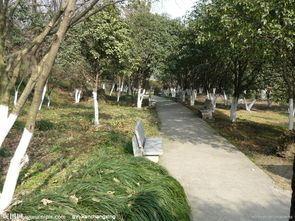 City Park2