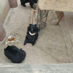 Badaling Bear Paradise User Photo