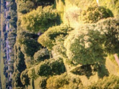 ブラーニー城と庭園