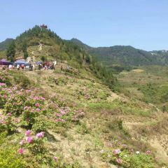 Dianjiang Peony Ecological Tourism Zone User Photo