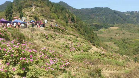 Dianjiang Peony Ecological Tourism Zone