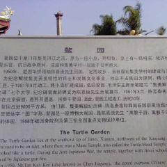 Turtle Garden User Photo