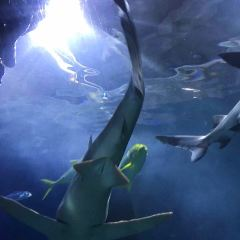 Melbourne Aquarium User Photo