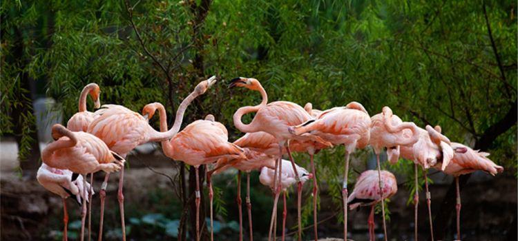 鄭州動物園2