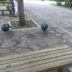Kejian Park User Photo