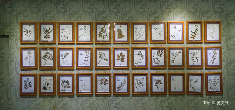 Guangdong Chinese Medicine Museum3