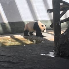 Panda Pavilion User Photo
