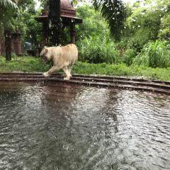 Bali Safari and Marine Park User Photo