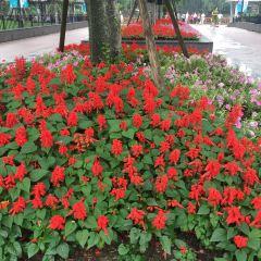 Lingnan Park User Photo