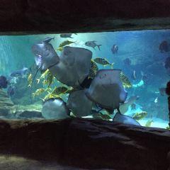 Golden Eagle Sea World User Photo