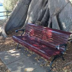 Mrs. Macquarie's Chair User Photo