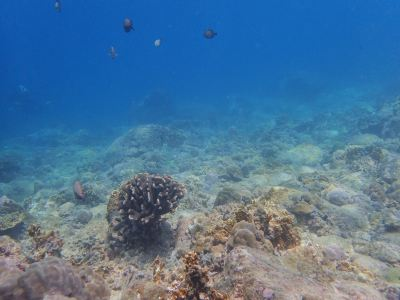 Aos Diving
