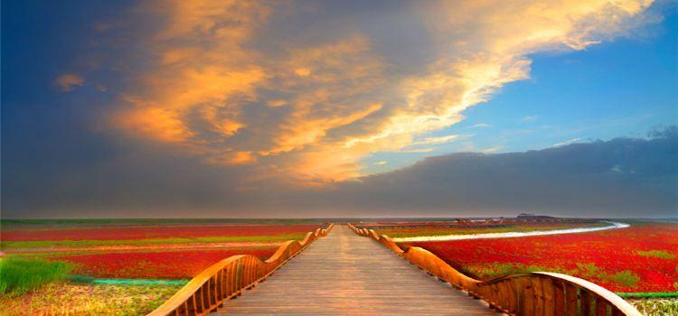 紅海灘國家風景廊道1