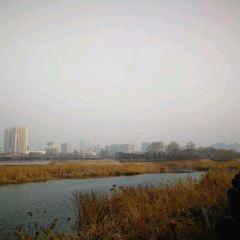 汾河景區用戶圖片