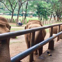 Elephant Nature Park User Photo