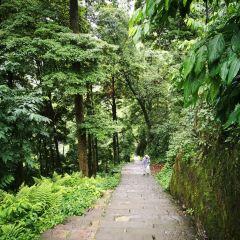 Gongde Forest User Photo
