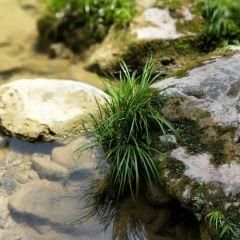 古苗河大峽谷用戶圖片