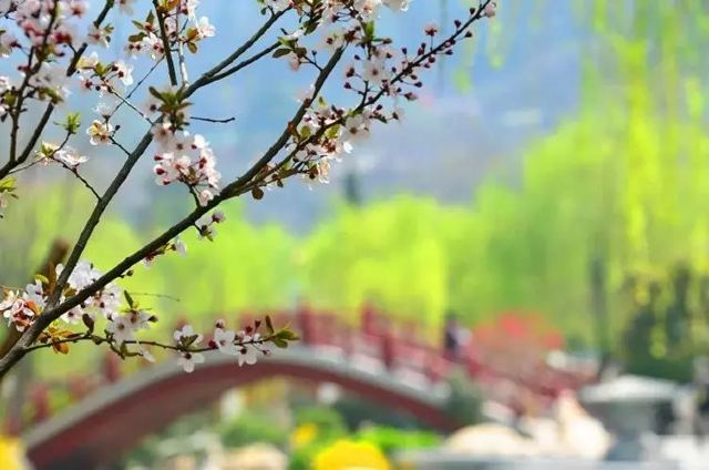 春分|莫負華清好時光