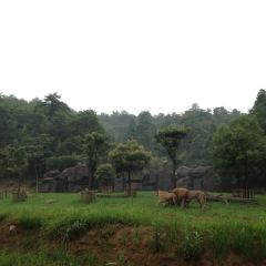 Hangzhou Safari Park User Photo