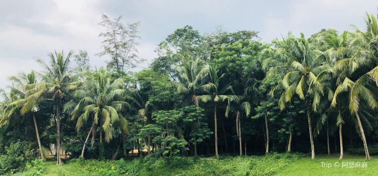 Xinglong Tropical Garden2
